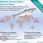 Wie erkenne ich beim beliebten Speisefisch Lachs ein ökologisch vertretbares Angebot?</p> <p>Greenpeace e.V.</p> <p>Lachs ist einer der beliebtesten Speisefische der Deutschen. Laut Fisch-Informationszentrum rangiert er auf Platz zwei, gleich hinter dem Alaska-Seelachs. &quot;Der Lachs ist ein Klassiker auf unseren Tellern, doch gleichzeitig auch ein Sorgenkind&quot;, sagt Sandra Schöttner, Meeresexpertin von Greenpeace. Überfischte Bestände und umweltschädliche Fang- oder Zuchtmethoden sind der Grund für eine rote Bewertung im aktuellen Greenpeace-Fischratgeber; der Ratgeber empfiehlt damit, nicht zu kaufen. Jedoch gibt es durchaus Ausnahmen, die noch ökologisch vertretbar sind: Etwa der Pazifische Lachs aus dem Nordostpazifik, der im Golf von Alaska mit Ringwaden, Schleppangeln oder Stellnetzen gefangen wurde. Ebenfalls noch im grünen Bereich liegt der Pazifische Lachs aus Wildfischereien der russischen Subfanggebiete Iturup-Insel und Sakhalin-Insel - sofern er dort mit Fallen gefangen wurde. Angaben zu Fanggebiet, Subfanggebiet und Fangmethode finden sich auf der Fisch-Verpackung oder an der Fischtheke - leider sind sie nicht immer vollständig aufgeführt. Verzichten sollten Verbraucher generell auf Lachs aus Aquakultur. Er stammt aus Massentierhaltung - mit allen erdenklichen Belgleiterscheinungen. Beispielsweise ist er aufgrund des eingesetzten Futters nicht ökologisch vertretbar: Die Produktion von einem Kilogramm Lachs benötigt ein bis zwei Kilogramm Fischmehl. Für ein Kilos Fischmehl werden bis zu sechs Kilo frischer Fisch verarbeitet. Fisch, der aus überfischten Beständen kommen kann. Nachhaltig geht anders. Weiterer Text über ots und www.presseportal.de/nr/6343 / Die Verwendung dieses Bildes ist für redaktionelle Zwecke honorarfrei. Veröffentlichung bitte unter Quellenangabe: &quot;obs/Greenpeace e.V.&quot;