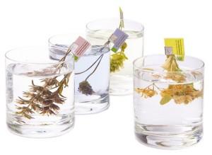 www.tea-exclusive.de - Bio Tee Blütenrispen