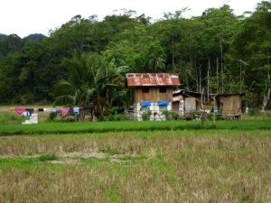 Reiseld auf den Philippinen (Bohol)