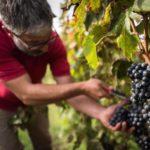 Italien Wein 2017