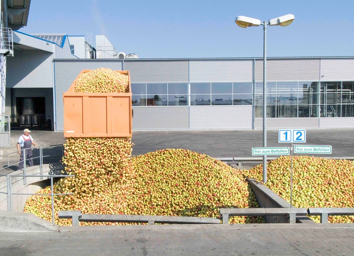 Keltereien produzieren Apfelsaft auf Hochtouren – alles wird verarbeitet!