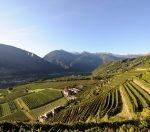 Weinlese in Valtellina