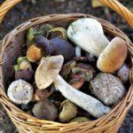 Experten warnen vor Pilz-Apps