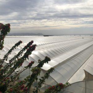 Ökologische Überraschung: Zu Gast im Gemüsegarten Europas