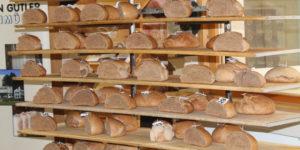 Brot-Aroma: Moderne und alte Weizensorten schmecken gleich gut
